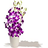 BRUNEI DENDROBIUM ORCHIDS BOUQUET - Birthday Flowers Thank You and Anniversary Bouquets by Eden4flowers