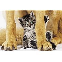 Seguro y bonito–perro y gato Art Print Póster