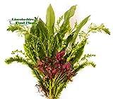 Portal Cool 5 filamentos: Las Plantas de Acuario en Vivo - 5 Tipos - Comprar Todo a la Vez para el Costo de 1 Entrega