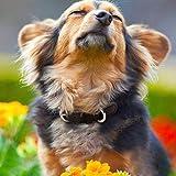 Yudote Hundehalsband Echtes Weiches Leder mit Leichter Mode Polyester Gurtband für Welpen Kleine Mittel groß Rassen Täglichen Gebrauch (Klein, Braun)