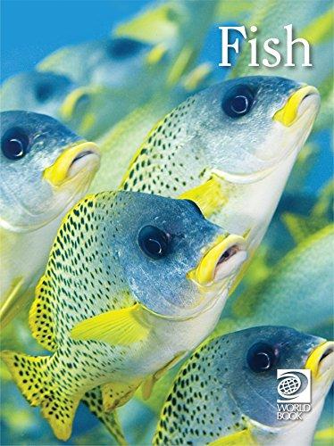 Fish (Animal Lives) (English Edition) eBook: Tom Evans: Amazon.es ...