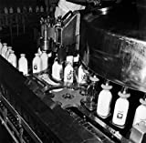 Milk Bottles on a Conveyor Belt at a Bottling Plant Poster Drucken (60,96 x 91,44 cm)