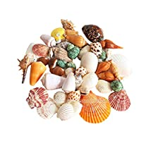 ANTOLE 200g Sea Shells Mixed Beach Seashells, Colorful Natural Seashells Perfect Accents for Candle Making,Home Decorations, Beach Theme Party Wedding Decor, DIY Crafts, Fish Tank and Vase Fillers