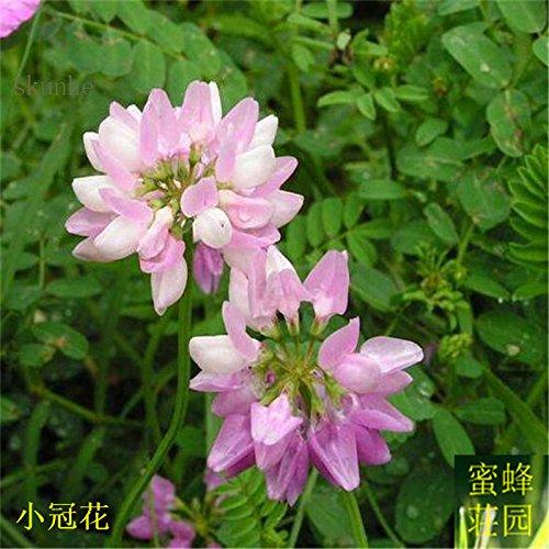 Polygonia longiflora taux de couverture longue floraison des semences de la capacité du sol à haute solide pour changer la petite fleur de la couronne 100 graines 2