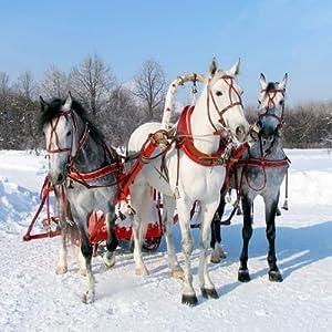 Erlebnisgutschein: Pferdeschlitten - Fahrt im Schnee in Rothenburg | meventi Geschenkidee