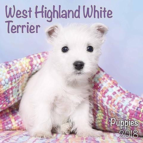 West Highland White Terrier Puppies M 18