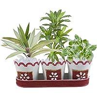 regali di Natale Set di 3 interno piantaers artigianalmente con