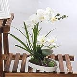 Nombre: Orquídea flores artificiales Arreglo Bonsai Miniascape Decoración del hogar flores de simulación Material: seda con moldeado por inyección. El producto está hecho de materiales saludables y ecológicos. No es fácil de desvanecer o caer...