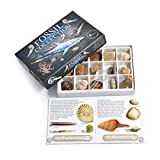 Fossil Collection Kit - Contains 15 Genuine Fossils! (Collection Kit with Study of Fossils Booklet)