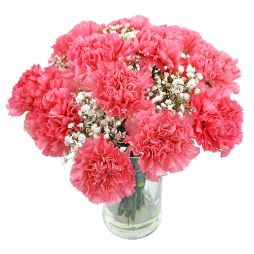 clare-florist-perfectly-pretty-pink-carnations-fresh-flower-bouquet