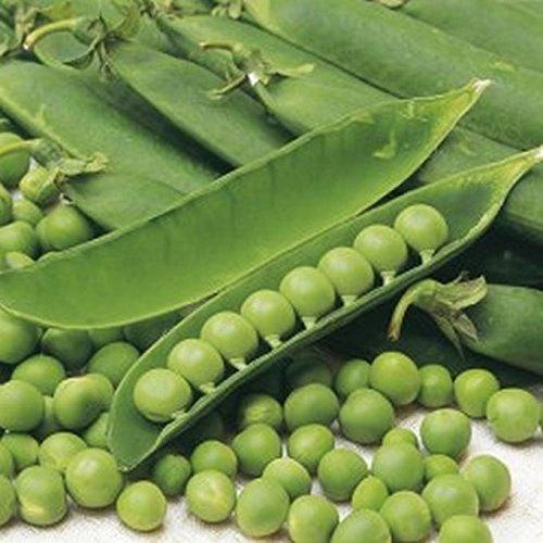 PLAT FIRM GERMINATIONSAMEN: 100 - Seeds: Süßes Provence Garden Pea - große Ernten von kleinen süßen und saftigen Erbsen !!! mmm