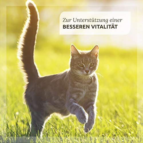"AniForte® *Bio-Bachblüten ""Angsthase"" für Hunde 20g Globuli - 4"