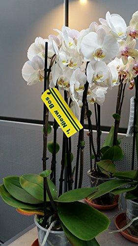 Orchidee.kaufen 76209