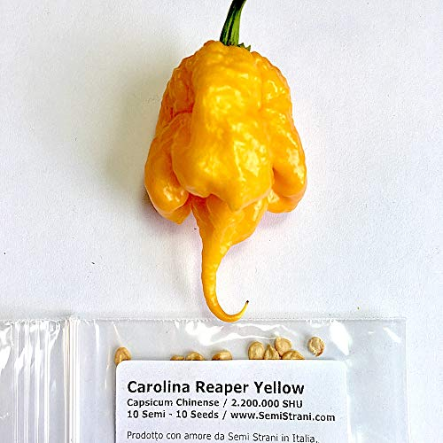 10 Graines Pures De Carolina Reaper Yellow, Le Piment Chili Le Plus Piquant Du Monde
