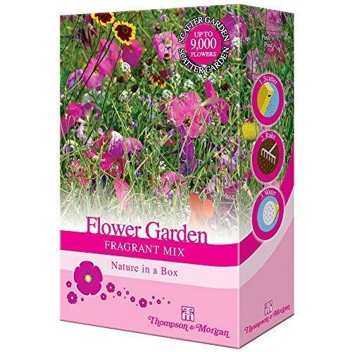 Gemischte Garten Blume Streuung Samen Bauen Sie Ihr Eigenes an Staude & Annuel Blumen für Häuschen, Wald & Parfümiert Gärten von Thompson & Morgan - Blumengarten Duft Gemischte Streuung Samen -