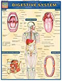 Digestive System (Quickstudy: Academic)