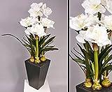 Amaryllis, weiß, mit Holztopf, Höhe 130cm Kunstpflanzen - künstliche Blumen