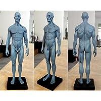 TT Dental nueva 30cm de altura anatómica Anatomía Humana Modelo de cuerpo ósea muscular de calavera