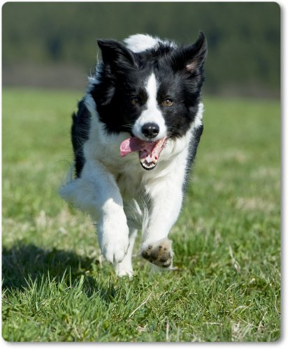 Mauspad / Mouse Pad ? Border Collie laufend auf der Wiese - 03 -