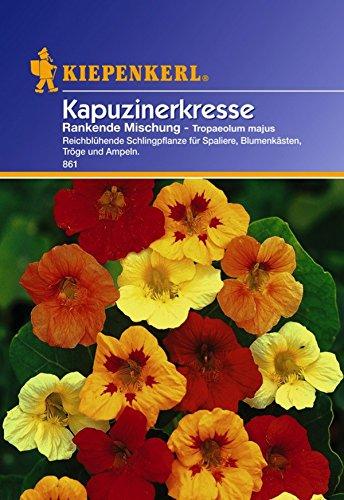 Produkt-Bild: Amazon.de Pflanzenservice Kiepenkerl-Saatgut Kapuzinerkresse, Tropaeolum majus