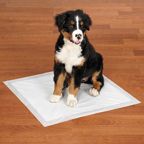 Bild: Training Pads für Puppy WCTraining
