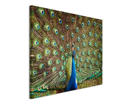 XXL Fotoleinwand 120x80cm Tierfotografie – Bunter Pfau auf Leinwand exklusives Wandbild moderne Fotografie für ihre Wand in vielen Größen (Vogel-wand-kunst-malerei)