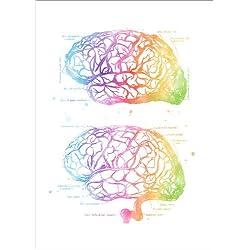 Cuadro Sobre Lienzo 90 x 130 cm: Human Brain Anatomy de Mod Pop Deco
