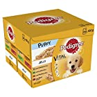 Pedigree Junior Wet Dog Food for Young