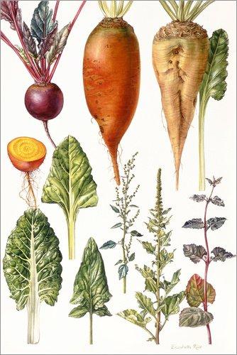 Posterlounge Leinwandbild 120 x 180 cm: Rote Beete und anderes Gemüse von Elizabeth Rice/Bridgeman Images - fertiges Wandbild, Bild auf Keilrahmen, Fertigbild auf echter Leinwand, Leinwanddruck