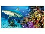 GRAZDesign 100535_001_01_04 Acrylglas Wandbild mit Bild-Motiv Hai am Korallenriff im Meer | Wand-Deko für Badezimmer/Bad als Fliesen-Dekoration (100x50cm)
