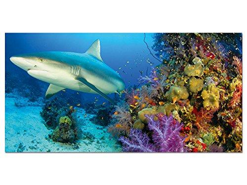 GRAZDesign Wandbilder Unterwasser Welt - Glasbild aus Acryl Home Dekoration Weißer Hai - Wandbild WC Bad XXL Korallen Riff / 100x50cm / 100535_001_01_04