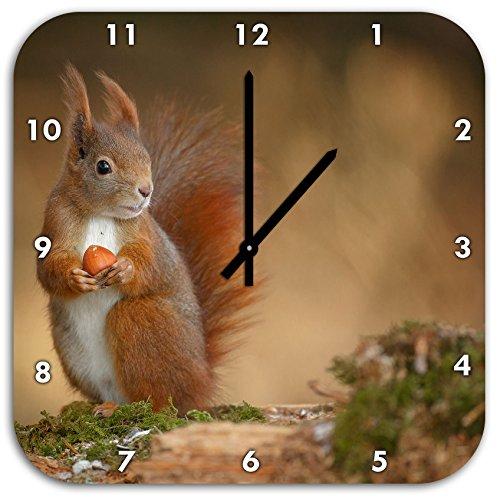 Freches Eichhörnchen mit Nuss, Wanduhr Quadratisch Durchmesser 48cm mit schwarzen spitzen Zeigern und Ziffernblatt, Dekoartikel, Designuhr, Aluverbund sehr schön für Wohnzimmer, Kinderzimmer, Arbeitszimmer