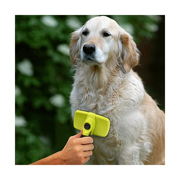 Pecute Slicker Dog Brushes,Self Cleaning Pet Grooming Brush- Removes 90% of Dead Undercoat and Loose Hairs,Suitable for Medium and Long Haired Dogs Cats 6