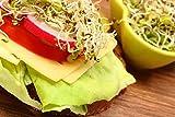 Bio Alfalfa Luzerne Keimsaat - Sprossensamen für die Zucht von Alfalfasprossen - der gesunde Energiespender - lecker in Salaten - Inhalt: 1 kg...