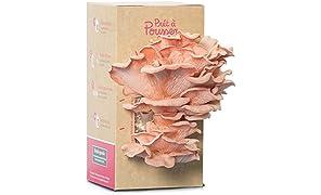 Kit pour faire pousser des Pleurotes Roses - Prêt à Pousser - Bio et Français