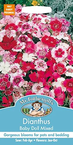 Mr. Fothergill's 13901 200 CountDianthus Baby Doll Mixed Seed