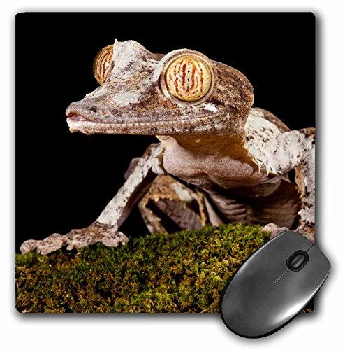Danita Delimont - Lizards - Giant Leaf-tailed Gecko lizard, Madagascar - NA02 DNO0928 - David Northcott - MousePad (mp_140211_1) (Leaf Gecko Giant Tailed)