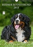 Berner Sennenhund 2018 (Wandkalender 2018 DIN A4 hoch): Berner Sennenhunde auf 13 wundervollen Fotos (Monatskalender, 14 Seiten) (CALVENDO Tiere) [Kalender] [Apr 01, 2017] Starick, Sigrid