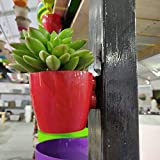 Exotic Planters Magnetic Pots-Small-Mix Colour-Set of 10