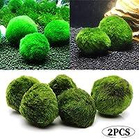 Romote 2pcs 3-4cm Marimo Moss Palle dal Vivo Acquario Piante alghe Pesce gamberetti Serbatoio Ornament