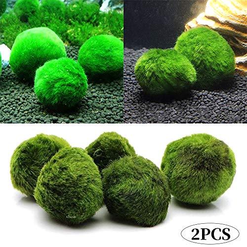 Marimo Moss Balls Dal Vivo Acquario Alghe Impianto Per Pesce Gamberetti Ornament Serbatoio 2 Pezzi (3-4cm)