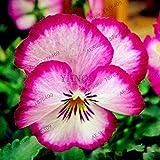 Pinkdose 100pcs / Bag Stiefmütterchen & quot; Bronze Avalanche Lavendel & quot; Blume Bonsai-Garten ausdauernde & amp hängen; Zweijährigen Haus und Garten: 22