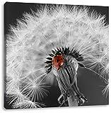 schöner Marienkäfer auf Pusteblume schwarz/weiß, Format: 40x40 auf Leinwand, XXL riesige Bilder fertig gerahmt mit Keilrahmen, Kunstdruck auf Wandbild mit Rahmen, günstiger als Gemälde oder Ölbild, kein Poster oder Plakat