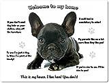 Blechschild / Warnschild / Fun Türschild - 'Willkommen in meinem Zuhause' - Motiv: Französische Bulldogge Welpe schwarz -- 08 - (20x30cm, englisch)
