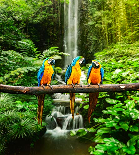 Fototapete selbstklebend blau-gelbe Papageien - 135x150 cm - Bildtapete Fotoposter Poster - Tier Tierbild Vogel Ara