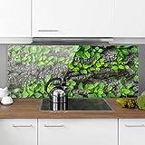 Bilderwelten Spritzschutz Glas - Efeuranken Baumrinde - Panorama Quer Wandbild Küchenrückwand Küchenspiegel Küchenspritzschutz Glasrückwand Küche Spritzschutz Herd, Größe HxB: 50cm x 125cm