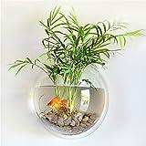 Fisch Tank Acryl Fish Bowl wandhängende Vase Fisch Blase Aquarium