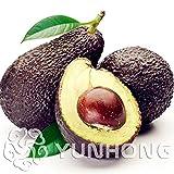 Bloom Green Co. Sale Promotions 10st Seltene Mini Avocado Pflanze Köstliche Birnen-Frucht-Anlage einfach für Hausgarten-Germ Bonsai wachsen