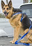 Arnés de nailon con código de color azul para perro, tamaño grande L-XL y 1,2 m de largo con mango acolchado estándar (no se molesta), evita accidentes al advertir a otros de su perro en adelante.