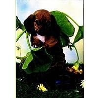 Leanne Giblett-Denys - Pet Portraits 500 Piece Puzzle - Pup in Boot